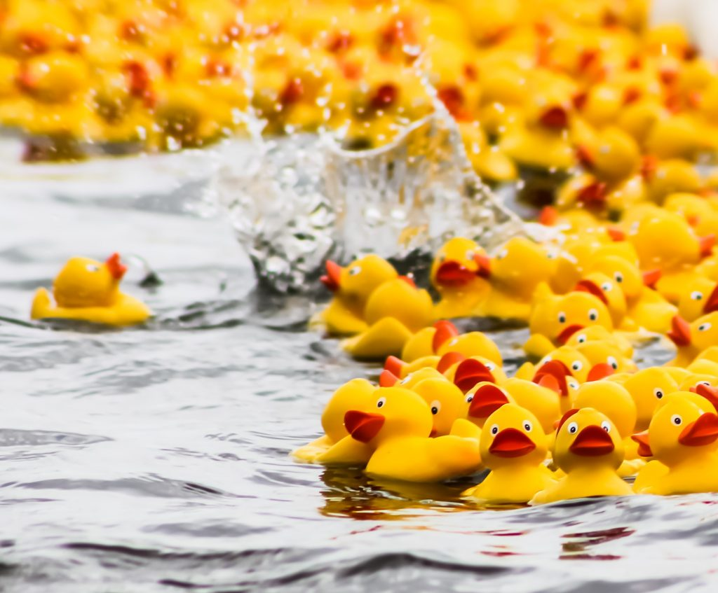 Join the Duck Squad HERE